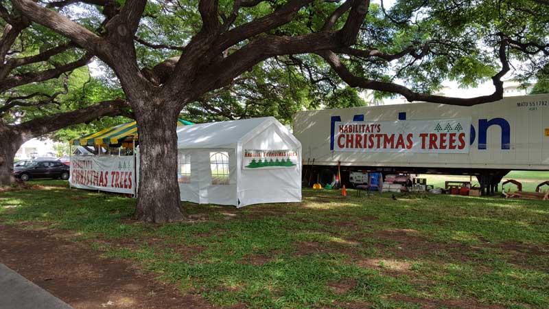 christmas trees hawaii